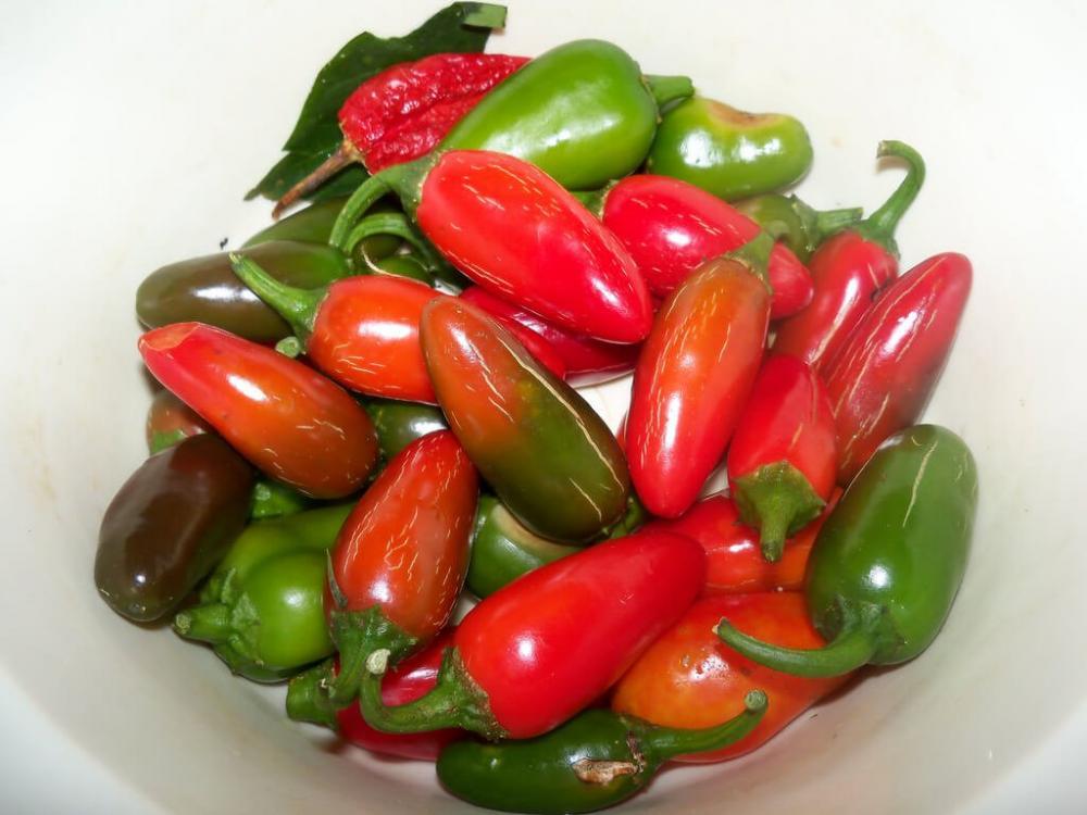 red-jalapeno-vs-green-jalapeno_lg.jpg